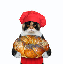 A Muti Colored Cat Cook In A Red Chef Hat And An Apron Is Holding A Round Sweet Bun. White Background. Isolated.