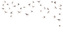 Flying Swallow Birds Silhouettes Vector Illustration. Nomadic Martlets Bevy Isolated On White.