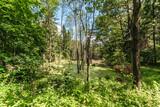 Leśne dzikie rozlewisko