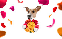 Valentines Mothers And Fathers Day Dog