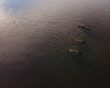3 Aligned Canadian Geese Swim Together Towards The Shadows In A Lake On A Cold Winter Afternoon