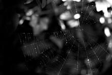 Black Halloween Deco Spider Web Background
