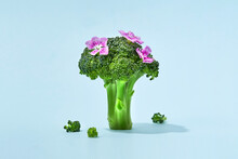 Broccoli Sprig With Flowers On Colored Background, Asparagus Cabbage Isolated. Perfect Sprig Of Fresh Broccoli