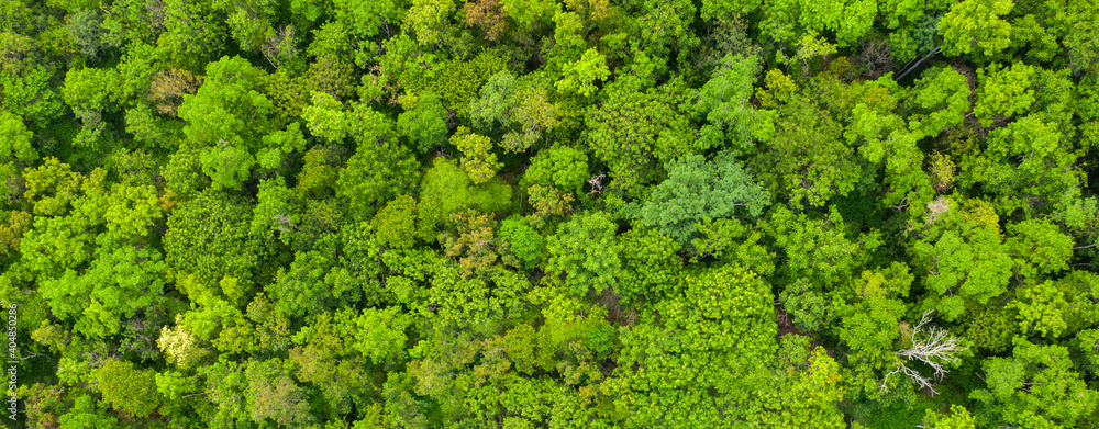 Fototapeta Aerial view Trees in the forest top view aerial rainforest ecosystem And healthy environment concept and background texture of forest view green trees from above text copy spac. Banner panorama