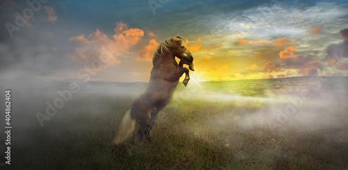 Billede på lærred A wild stallion in the evening sunshine outdoors