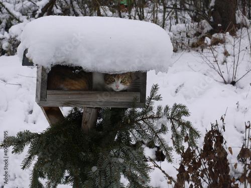 Leinwand Poster Junge Katze im Futterhaus im Winter