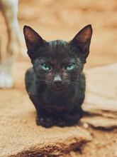 Close-up Portrait Of Black Cat Sitting On Ground