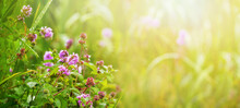 Wild Flowers Among The Greenery In Bright Sunlight, Summer Background