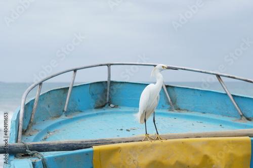 Canvas Print Garza posada sobre una embarcación