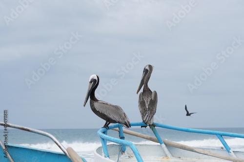 Photo Pelicanos sobre una embarcación en la playa