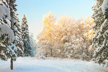 Winter Morning Landscape Of A Snowy Forest Against A Blue Sky.