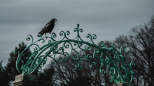 Crow Perched On An Ornate Gate At Lyndhurst Mansion