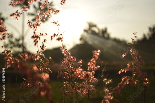 Canvas Print Close-up Of Plants Growing On Field Against Sky