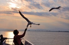 Woman Feeding Seagull Over Sea Against Sky During Sunset