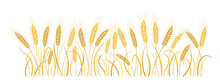 Field Cartoon Wheat Spikelets. Gold Ears Ripe, Agricultural Symbol Flour Production. Design Background Organic Farm Elements, Organic Vegetarian Bread Packaging Beer Label Vector