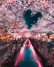 Canal Surrounded By Cherry Blossom Trees With Heart Shape