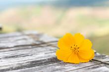 Yellow Flowers On Wooden Floor