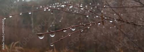 Fotografiet Close-up Of Wet Plant During Rainy Season