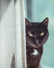 Black Cat Near Curtain