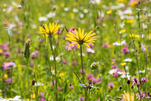 Fototapety, obrazy: Close-up Of Flowering Plants On Field