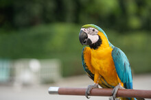 A Colorful Macaw Carved On A Raised Log