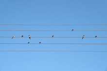 Swallows Sit On Wires Like Music Notes