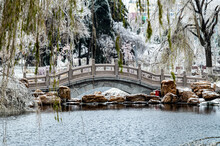 Winter Landscape Of Changchun Peony Garden In China After Rain And Snow
