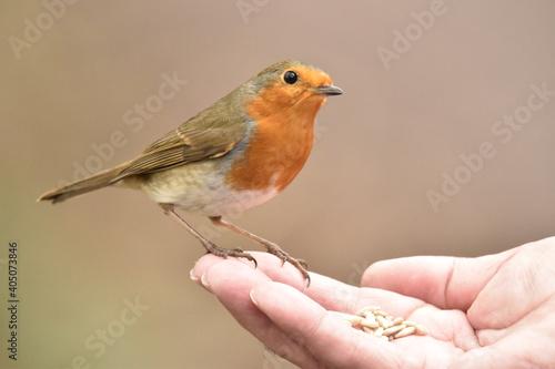 Fototapeta Close-up Of Hand With Small Bird