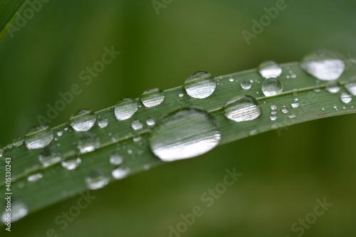 Obraz Close-up Of Raindrops On Green Leaves During Rainy Season - fototapety do salonu