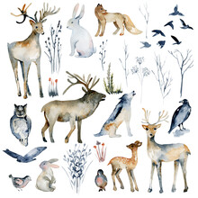 Collection Of Watercolor Forest Animals (wolf, Owl, Fox, Rabbit, Deer, Hare, Birds, Elk) And Winter Dry Forest Plants, Hand Drawn Isolated Illustration On White Background