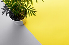 Tropical Palm Tree In A Pot With Free Space, Text Box. Flat Lay, Nature Concept, Layout. Colors Of The Year 2021 Gray And Yellow