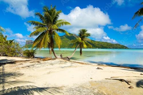 Fototapeta Palm Trees On Beach Against Sky