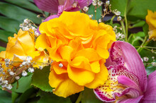 Yellow Roses In Natural Light, With Pink Orchid Flowers