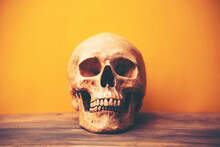 Close-up Of Human Skull On Table Against Orange Wall