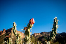 Close-up Of Flowering Cactus Plant Against Blue Sky