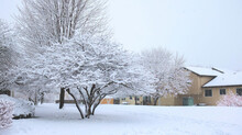 Block Of Houses With Beautiful Trees Covered With Snow