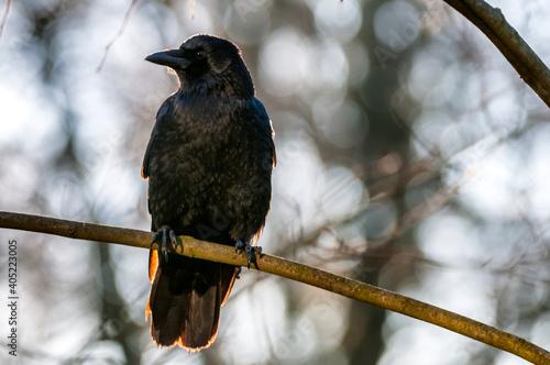 Fototapeta premium Close-up Of Bird Perching On A Branch