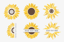 Color Sunflowers Set. Flower Border.