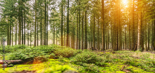 Obraz Silent Forest in autumn fall with beautiful bright sun ray - fototapety do salonu