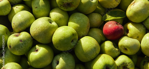 Papel de parede Lots of fresh raw apples