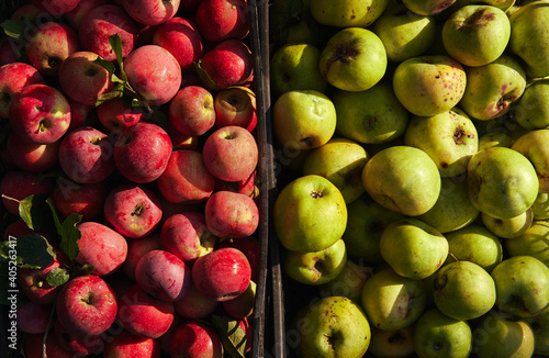 Fotografia Lots of fresh raw apples