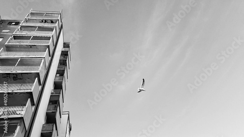 Low Angle View Of Birds Flying Against Sky Fotobehang