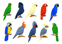 Bright Tropical Parrots Set. Exotic Birds Sitting On Branches, Red Or Blue Macaw, Blue Cockatoo, Grey And Amazon Parrots. Isolated Illustrations For Jungle Wildlife, Caribbean Islands Fauna Concept