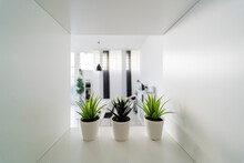 Three Potted Plants On Office Shelf