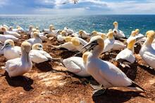 Helgoland German North Sea Island