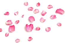 Blurred A  Group Of Sweet Pink Rose Corollas With Droplets On White Isolated Background