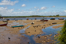 Vulture Picking Scraps Off Fishing Boats At Low Tide In Corcao Beach (Praia Corcoa) Itacare, Brazil