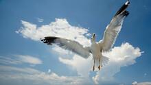 Seemöwe Mit Gespreizten Flügeln Unter Blauem Himmel Mit Wolken