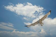 Möwe Mit Gespreizten Flügeln Unter Blauem Himmel Mit Wolken