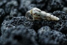 Close Up Snail House